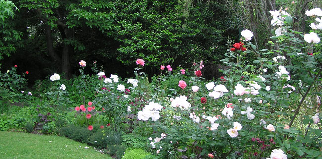 East Roses